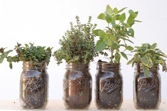 Gardening With Kids: Mason Jar Herbs