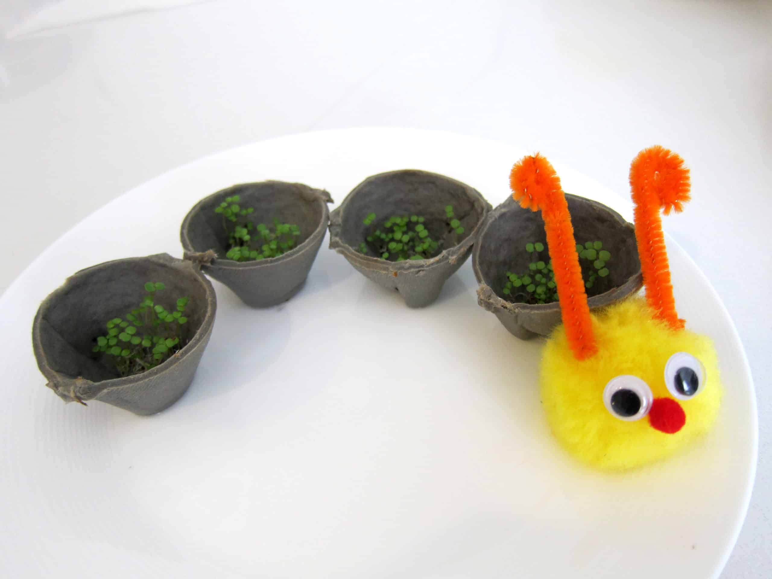 Cress Caterpillars
